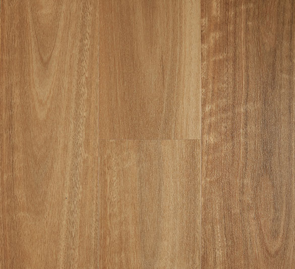 spotted gum iconic